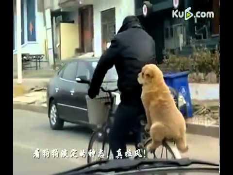 狗狗搭腳踏車~~拉風哩....