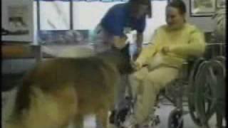 Pets Help Patients in Hospitals