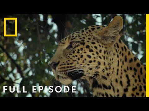 Dawn of Darkness (Full Episode) | Savage Kingdom