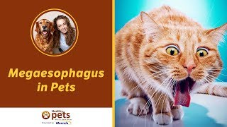 Megaesophagus in Pets