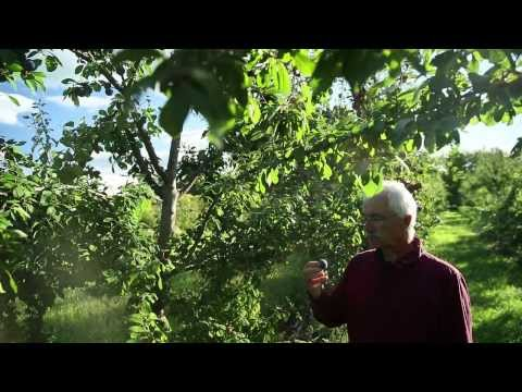 How to Convert a Conventional Orchard into a Perma-Orchard