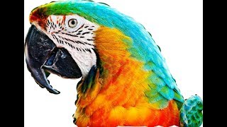 Top 05 Macaw Bird and Price