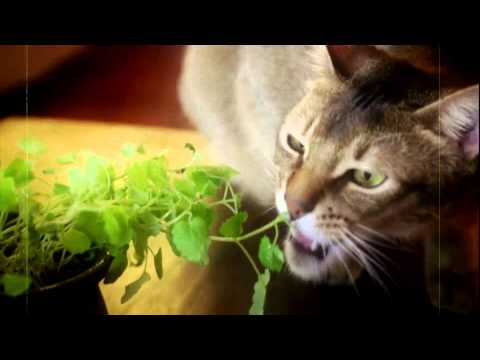 Movie - Catnip: Egress to Oblivion? (2012)