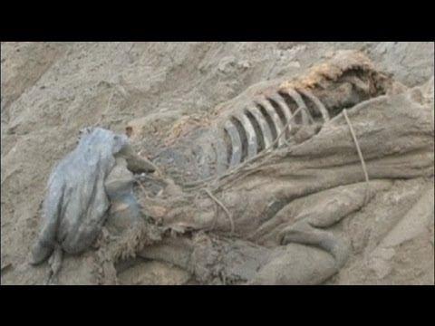 ritrovamento di un mammut in siberia