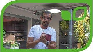 Karl Ploberger - die wichtigsten Tipps vom Fernsehgärtner