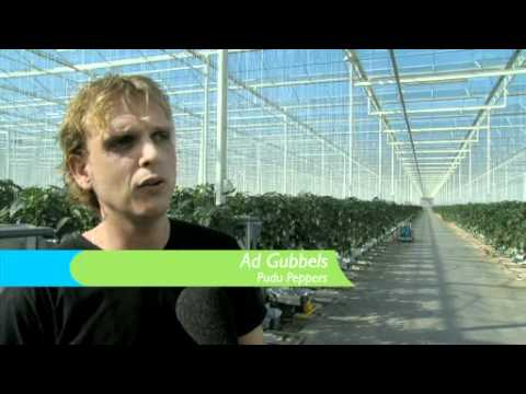 Greenport Ondernemers TV - Paprika