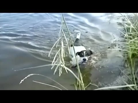 il-cane-pescatore-284