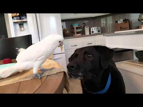 Se hvad der skrer da papegøje vender sig om mod hund.