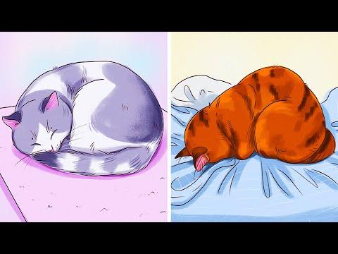O que a posição de dormir do seu gatinho revela