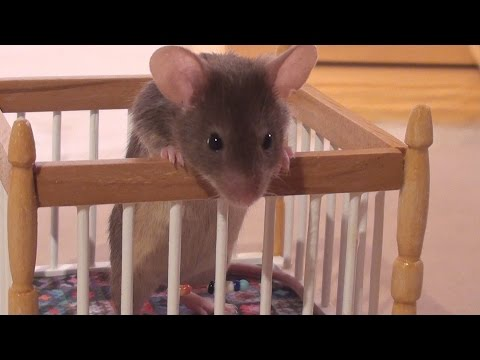 Little Mouse Nora meets the Baby Mice for the First Time (видео)