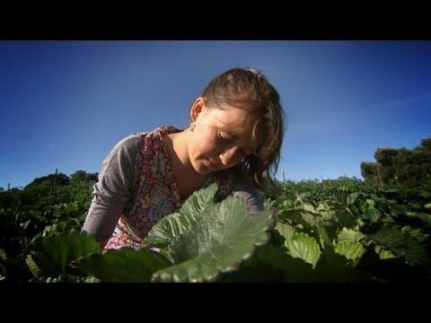 Feld zur Gabel - 9 Milliarden Mäuler zu stopfen: Die Zukunft der Landwirtschaft (Ep. 2)