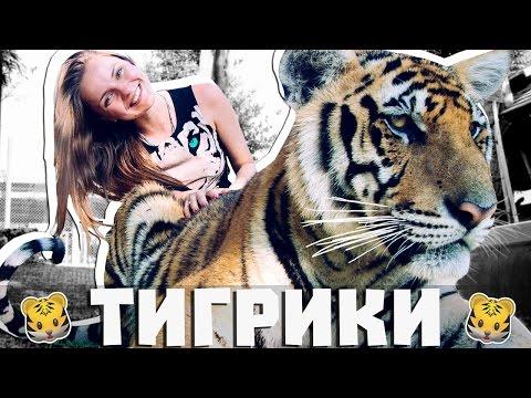 THAILAND VLOG #11 Тигрики (Tiger Kingdom Phuket, Королевство Тигров, Тигры, Ручные Тигры)