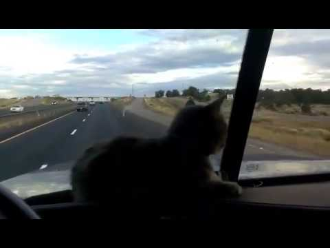 Overpasses makes Trucker Cat nervous.