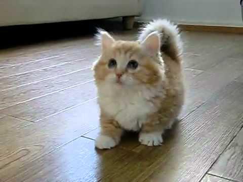 بزونه - احلى قطه شايفتها.