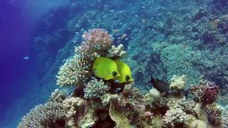 Soma Bay Egypt  city photos gallery : Diving Soma Bay - The Breakers Hotel (Egypt) 2015 HD