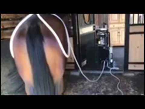 PEMF For Horses Video - Magna Wave