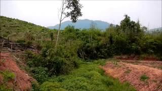 Mus saib kuv daim teb ntoo yaas (Rubber plantation and fruit trees farm in Laos)