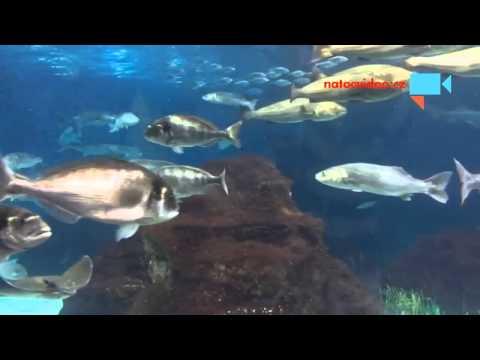 The Aquarium of Barcelona