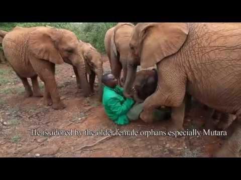elefante viene abbandonato dalla madre: ecco la sua nuova famiglia!