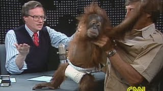 5 Reasons Why Animals Make The Best TV Guests