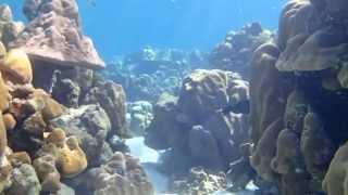 Beautiful Places For Snorkeling, Koh Lanta, Thailand