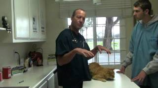 Hair loss and Itching in a Cat