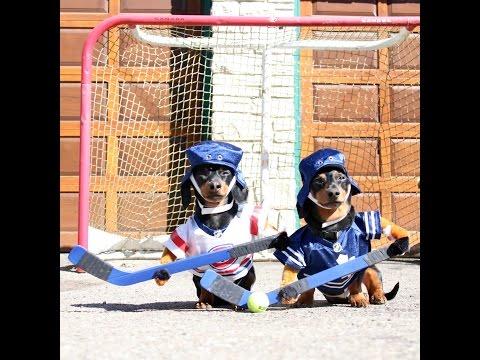 Собаки-хоккеисты