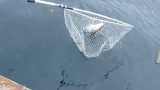 Video Pesca de barco aos besugos MP3, 3GP, MP4, WEBM, AVI, FLV Desember 2017