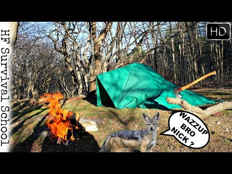 Solo Overnight Camping - Predator Guests - Bushcraft , Cooking , Axe , Knife - Survival - HD Video
