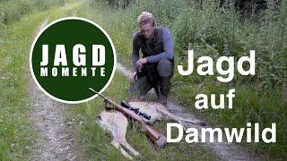 Video JagdMomente | Folge 3 | Jagd auf Damwild und Reh im Frühsommer MP3, 3GP, MP4, WEBM, AVI, FLV Agustus 2017