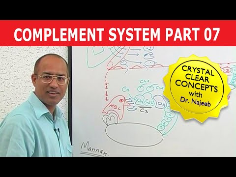 Complement System - Immunology - Part 7/18