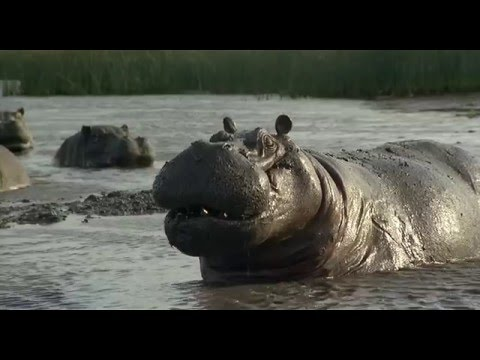 Preview Trailer Io sto con gli ippopotami, trailer del film con Terence Hill e Bud Spencer