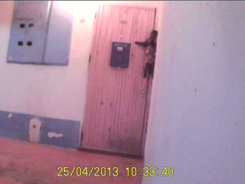 Cat in Russia rings doorbell to get back home.