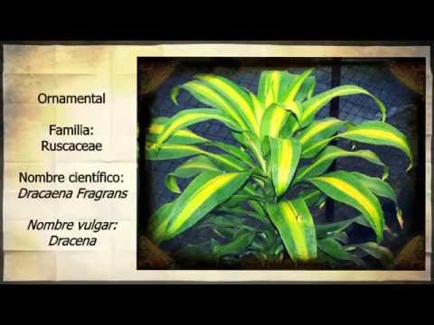 Clasificaci n de plantas herb ceas y ornamentales del for Informacion de plantas ornamentales