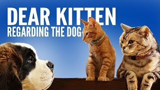 Dear Kitten: Regarding The Dog - YouTube