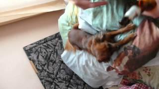 Video Scarr Felix Freestyle for Robi