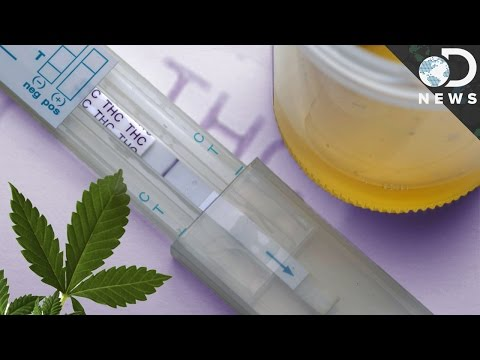 How Accurate Are Drug Tests?