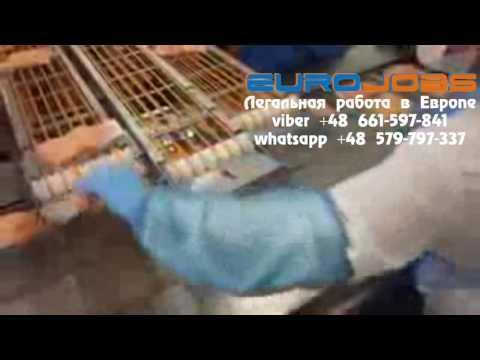 Работа на рыбном заводе цех сортировки EuroJobs