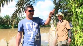 Download Video MANCING MANIA | JELAWAT DARI KALIMANTAN TENGAH (14/01/18) 1-3 MP3 3GP MP4