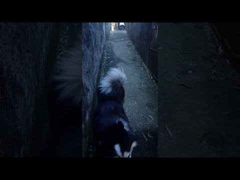 Σκύλος κάνει παρκούρ