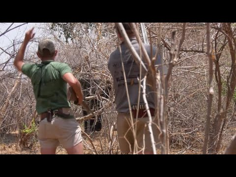 This is Africa-Episode 7- Season 3- Wounded and lost ?