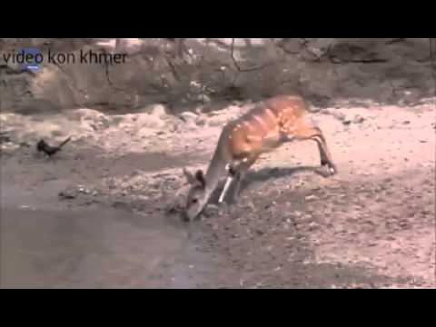 Những may mắn có một không hai nam 2015/video kon khmer