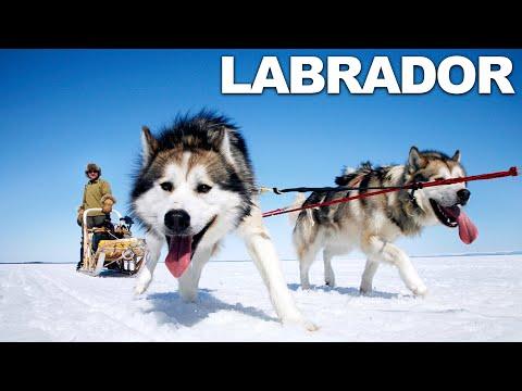 Survivorman | Season 2 | Episode 3 | Labrador | Les Stroud
