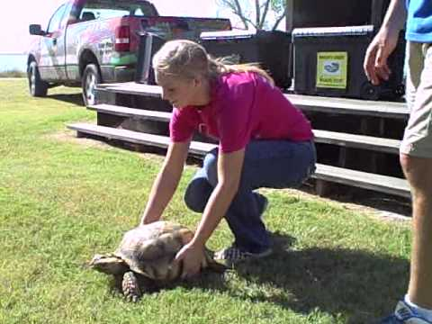 reptileshowtexasstyle - Crocodile Encounters Reptile Show What is Crocodile Encounter? Crocodile Encounter is a fully licensed and insured USDA zoological facility whose primary foc...