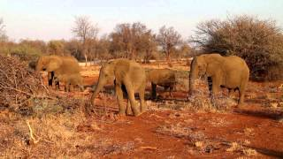 Madikwe Game Reserve South Africa  City new picture : Thakadu River Camp, Madikwe Game Reserve. South Africa