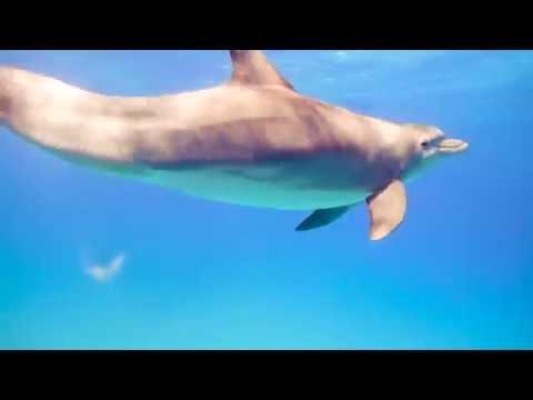 "Web Série ""The Freediving Univers"" : The dolphins hearts (épisode 1)"