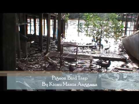 Pigeon/ Dove Bird Trap (видео)