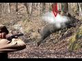 Lov na divlju svinju Sjajan odstrel   divlja svinja lov