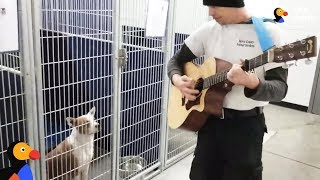 Man Sings To Shelter Dogs To Help Them Feel Better | The Dodo by The Dodo