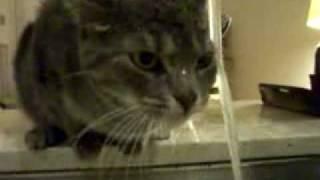 У кота сушняк
